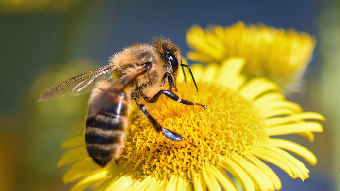 How To Treat A Bee Sting And When To Go To A Doctor